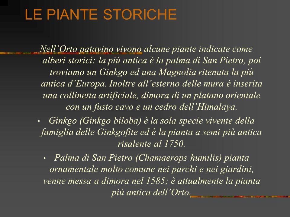 LE PIANTE STORICHE