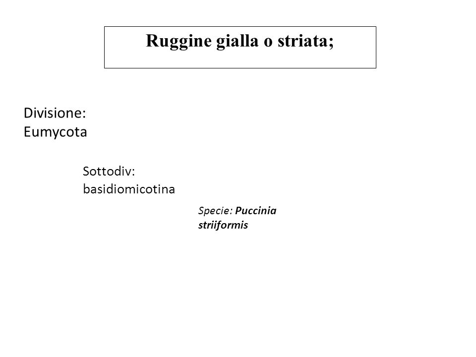 Ruggine gialla o striata;