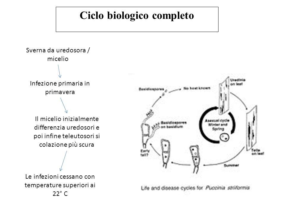 Ciclo biologico completo