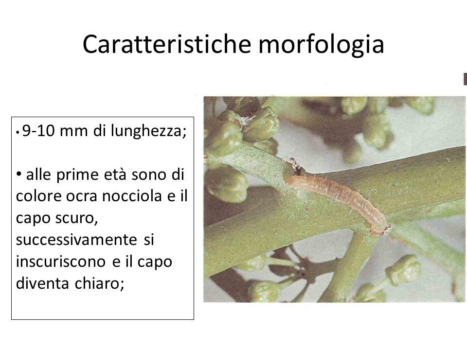 Caratteristiche morfologia