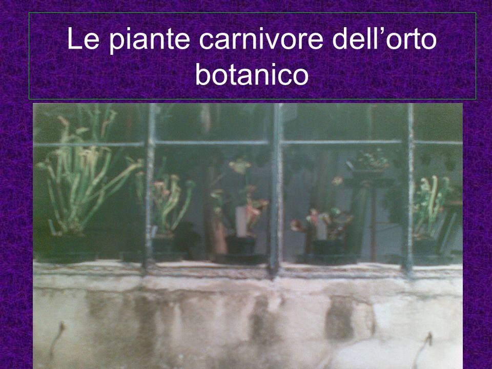 Le piante carnivore dell'orto botanico