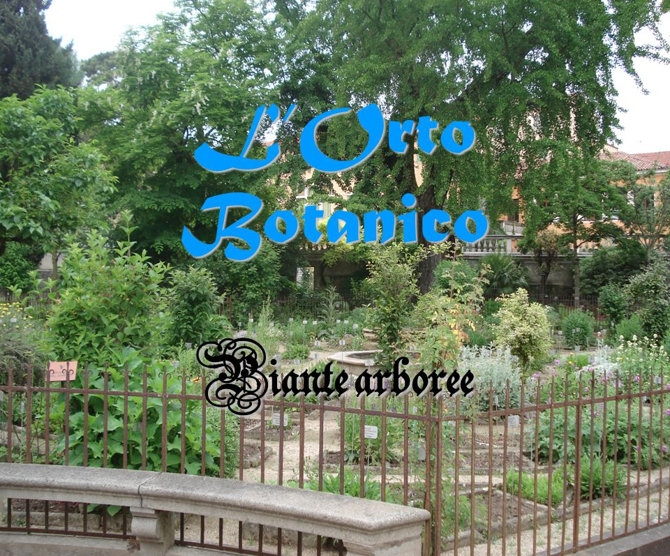 L'Orto Botanico Piante arboree