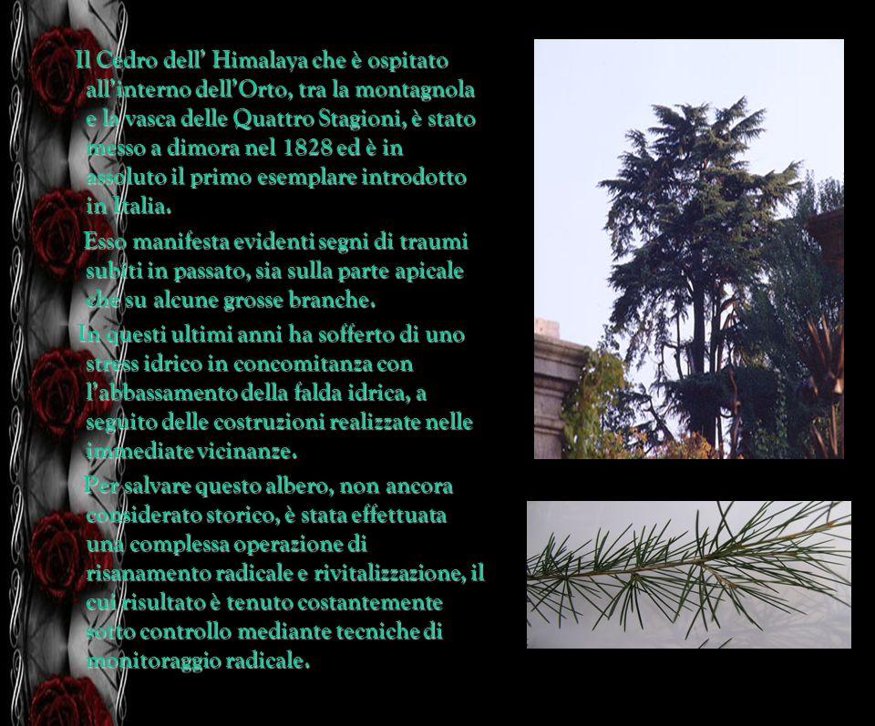 Il Cedro dell' Himalaya che è ospitato all'interno dell'Orto, tra la montagnola e la vasca delle Quattro Stagioni, è stato messo a dimora nel 1828 ed è in assoluto il primo esemplare introdotto in Italia.