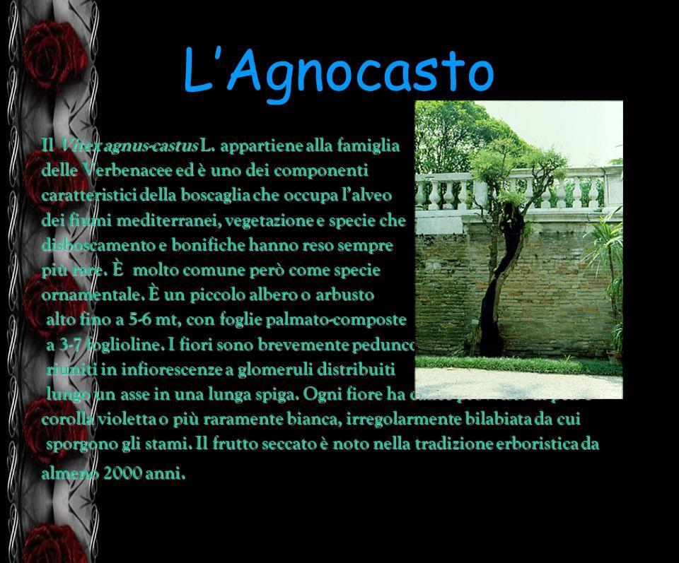 L'Agnocasto Il Vitex agnus-castus L. appartiene alla famiglia