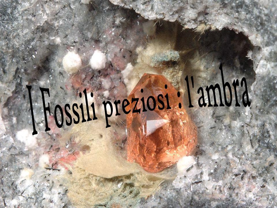 I Fossili preziosi : l ambra