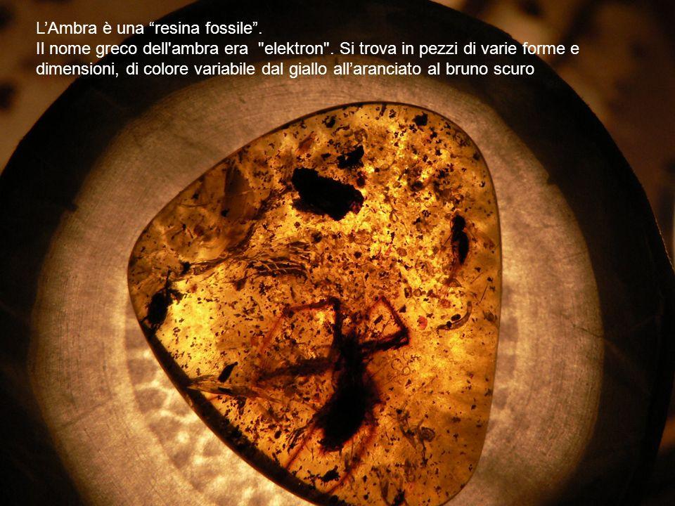 L'Ambra è una resina fossile .