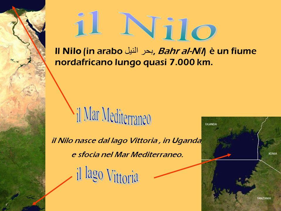 il Nilo il Mar Mediterraneo il lago Vittoria
