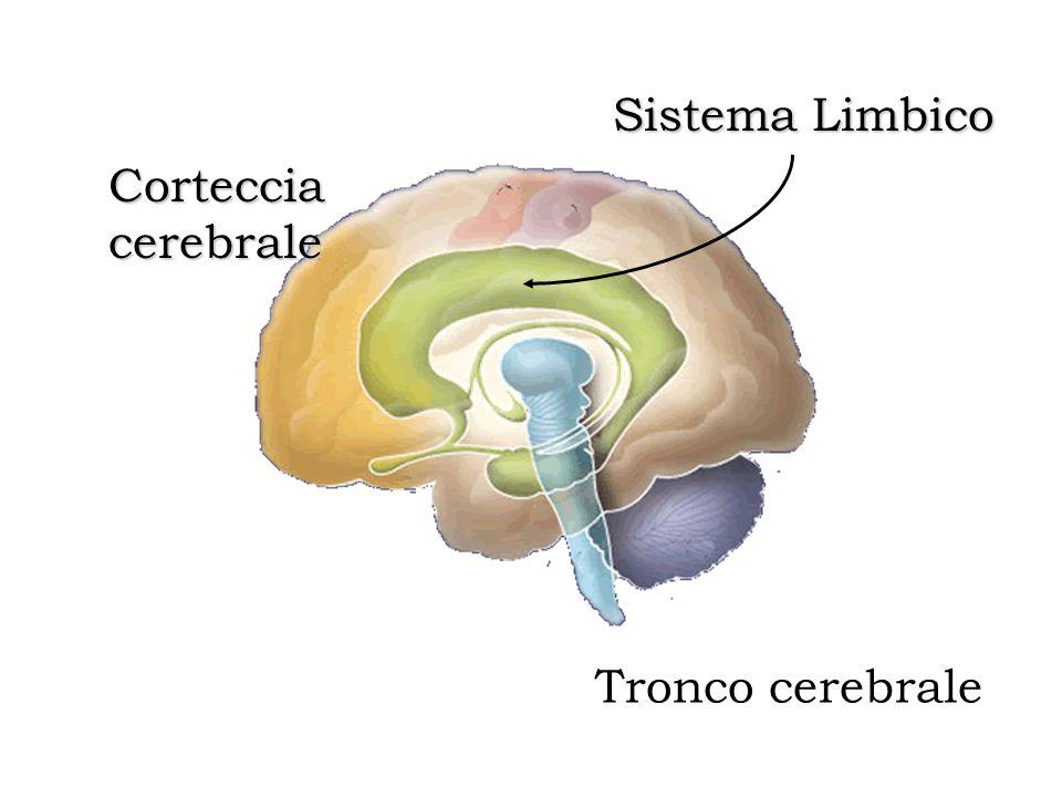 Sistema Limbico Corteccia cerebrale Tronco cerebrale
