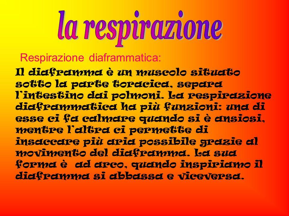 la respirazione Respirazione diaframmatica: