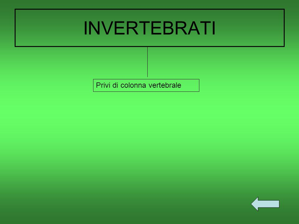 INVERTEBRATI Privi di colonna vertebrale