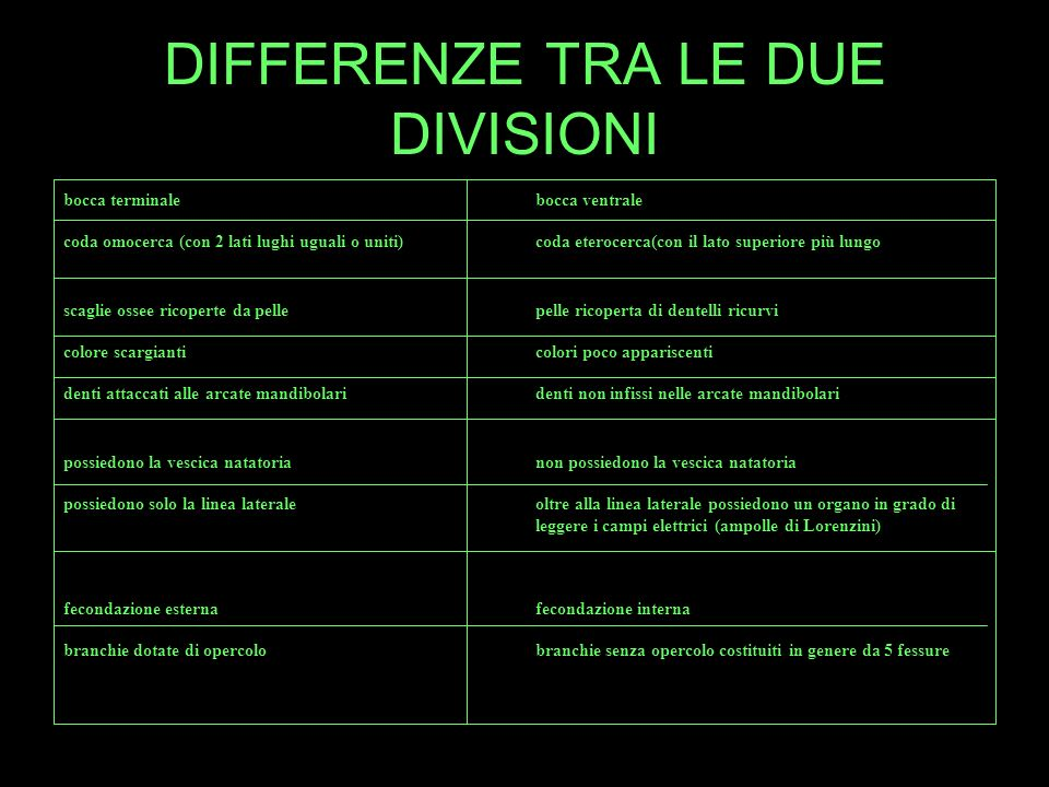 DIFFERENZE TRA LE DUE DIVISIONI