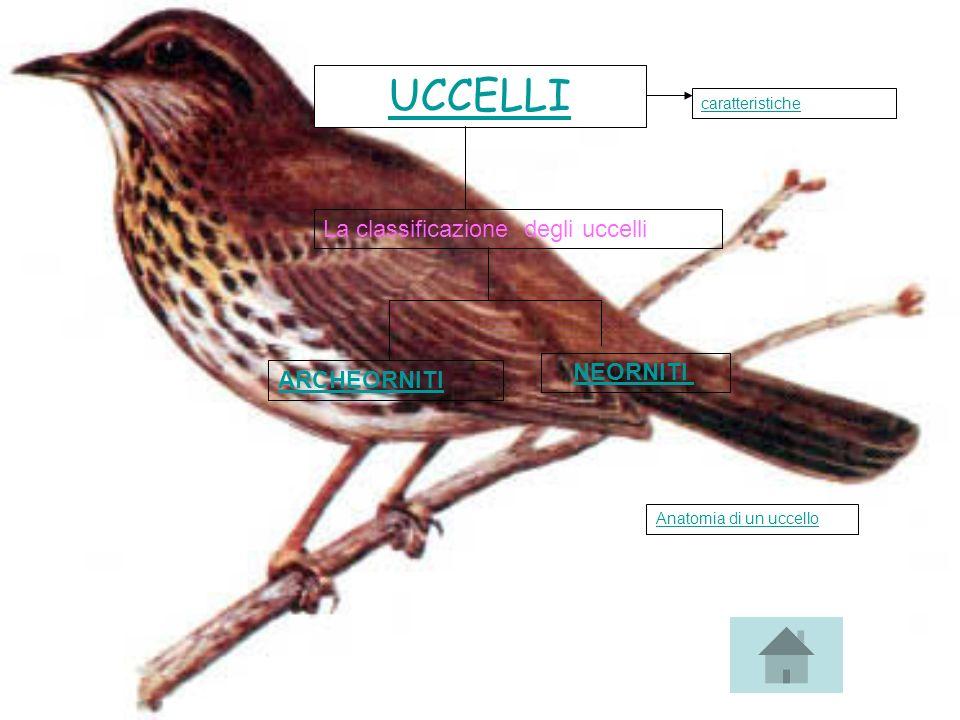 UCCELLI La classificazione degli uccelli NEORNITI ARCHEORNITI