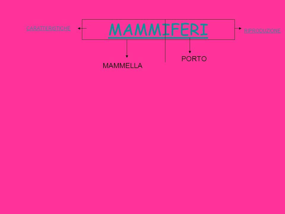 MAMMIFERI CARATTERISTICHE RIPRODUZIONE PORTO MAMMELLA