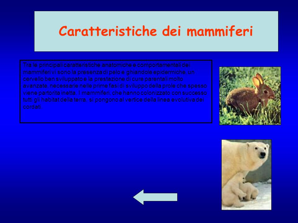 Caratteristiche dei mammiferi