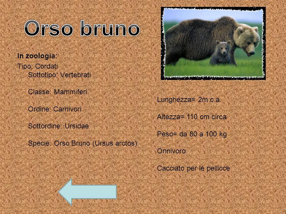 Orso bruno In zoologia:
