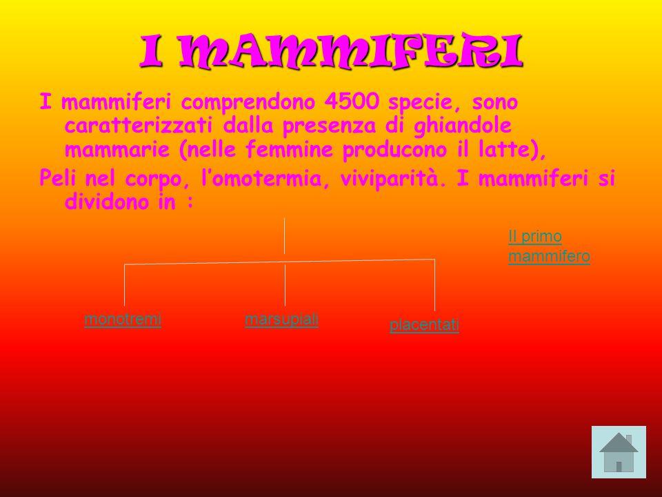 I MAMMIFERI I mammiferi comprendono 4500 specie, sono caratterizzati dalla presenza di ghiandole mammarie (nelle femmine producono il latte),
