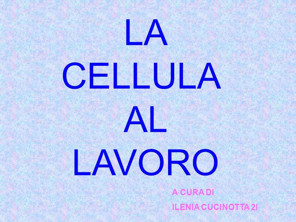 LA CELLULA AL LAVORO A CURA DI ILENIA CUCINOTTA 2I