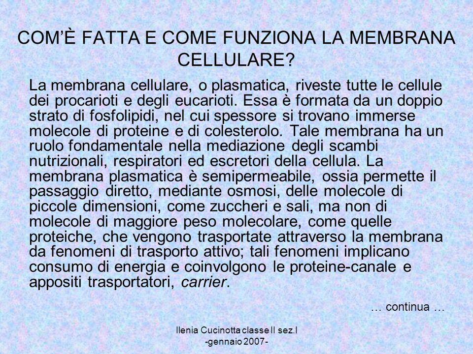 COM'È FATTA E COME FUNZIONA LA MEMBRANA CELLULARE