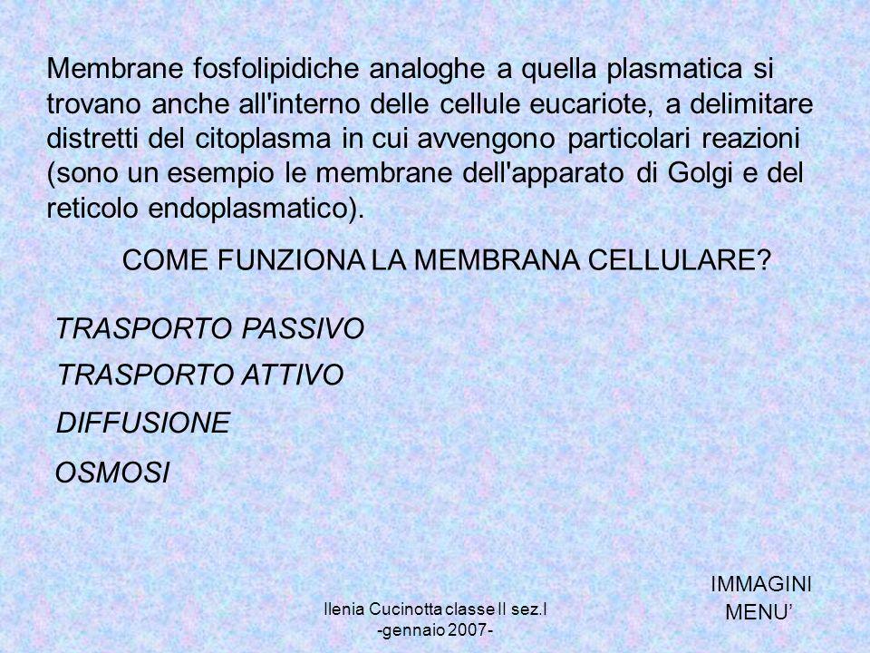 Ilenia Cucinotta classe II sez.I -gennaio 2007-
