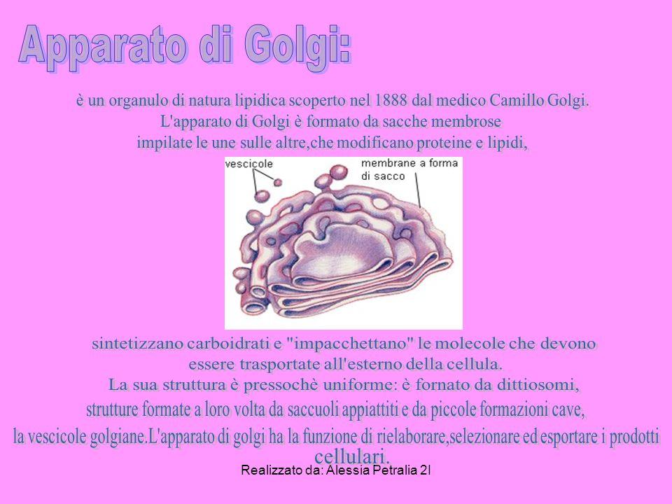 Apparato di Golgi: è un organulo di natura lipidica scoperto nel 1888 dal medico Camillo Golgi. L apparato di Golgi è formato da sacche membrose.