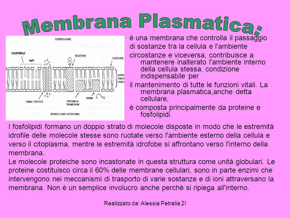 Realizzato da: Alessia Petralia 2I