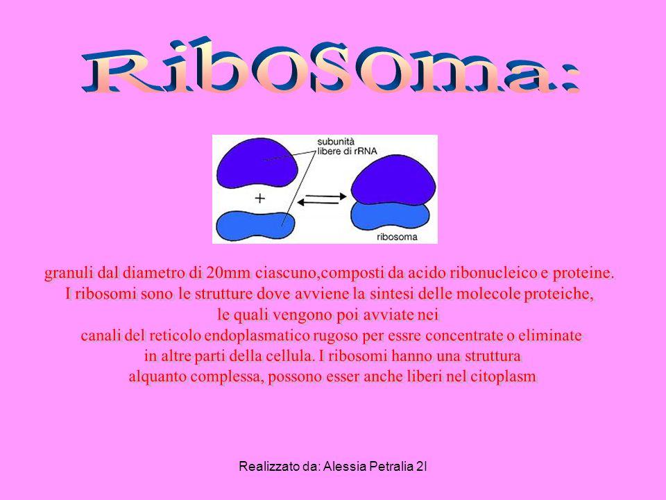 Ribosoma: granuli dal diametro di 20mm ciascuno,composti da acido ribonucleico e proteine.