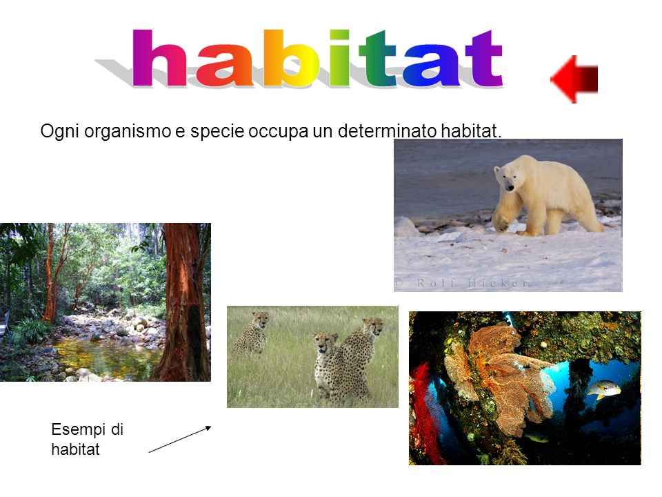 habitat Ogni organismo e specie occupa un determinato habitat.