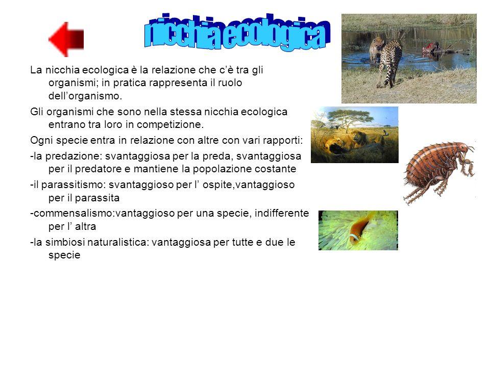 nicchia ecologicaLa nicchia ecologica è la relazione che c'è tra gli organismi; in pratica rappresenta il ruolo dell'organismo.