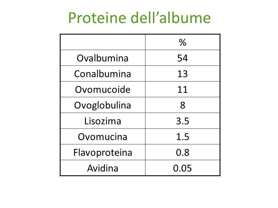 Proteine dell'albume % Ovalbumina 54 Conalbumina 13 Ovomucoide 11