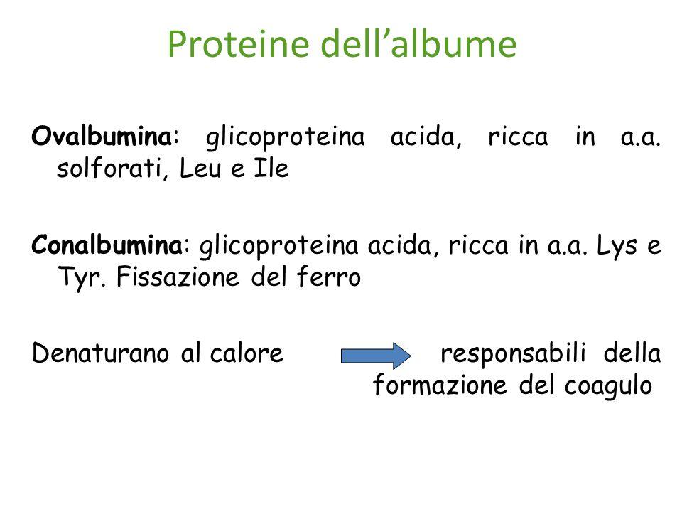 Proteine dell'albume Ovalbumina: glicoproteina acida, ricca in a.a. solforati, Leu e Ile.