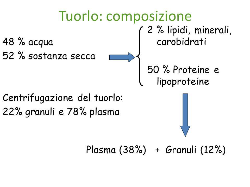 Tuorlo: composizione 2 % lipidi, minerali, carobidrati