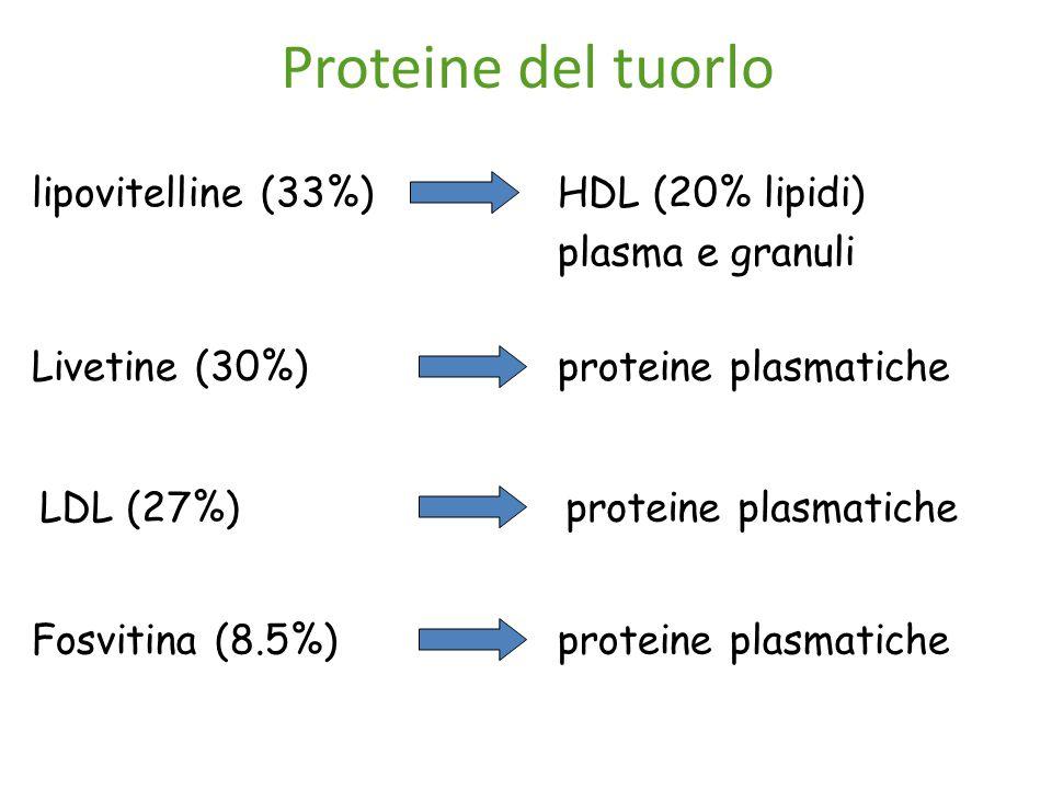 Proteine del tuorlo lipovitelline (33%) HDL (20% lipidi)