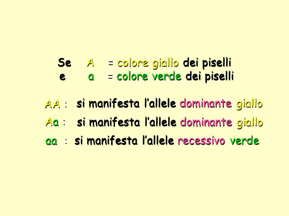 Se A = colore giallo dei piselli