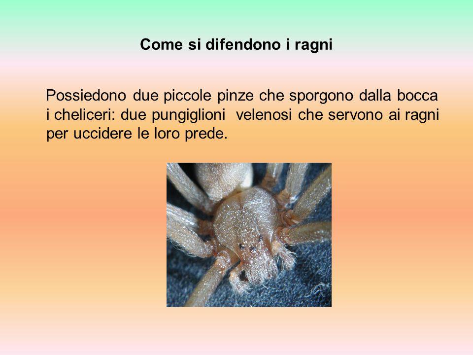 Come si difendono i ragni