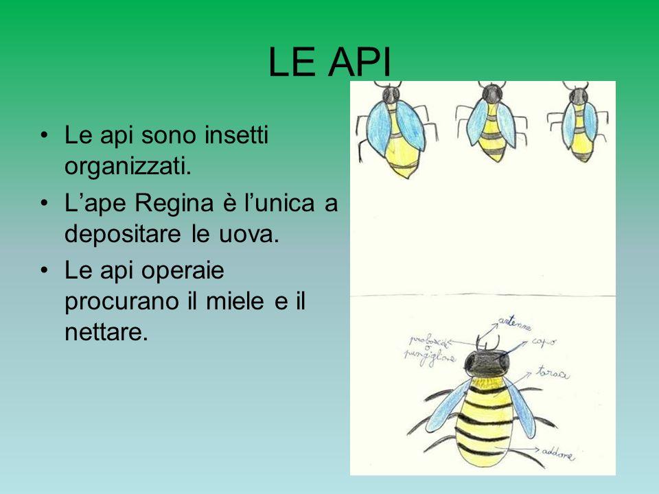 LE API Le api sono insetti organizzati.