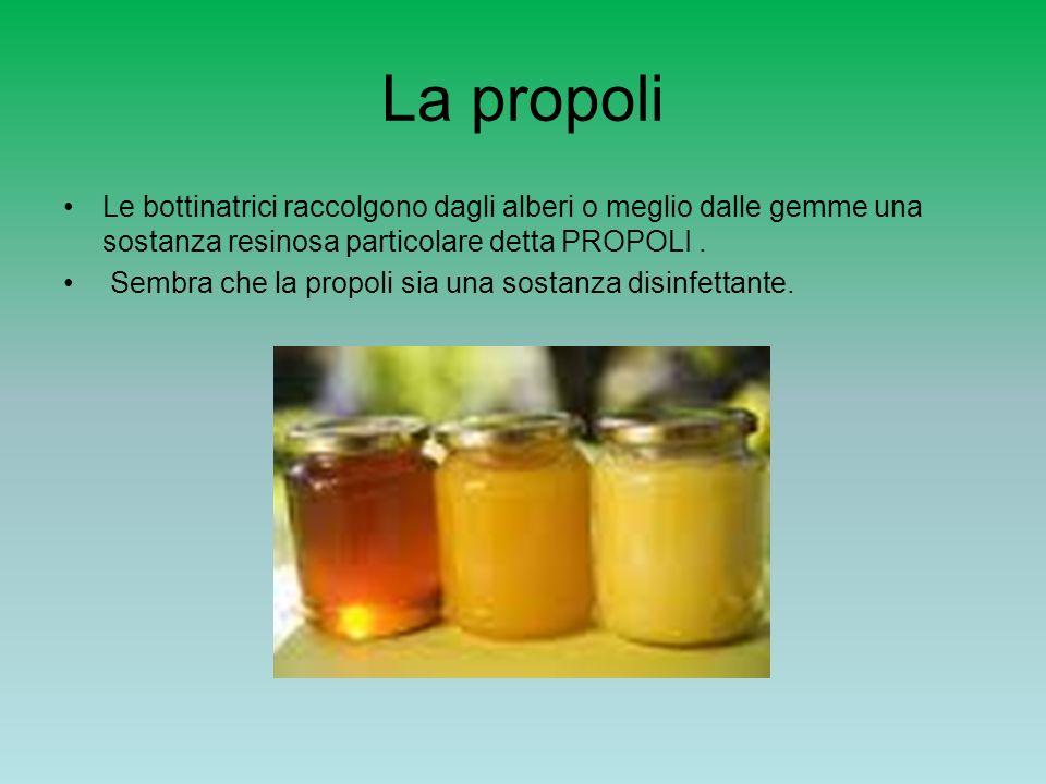 La propoli Le bottinatrici raccolgono dagli alberi o meglio dalle gemme una sostanza resinosa particolare detta PROPOLI .