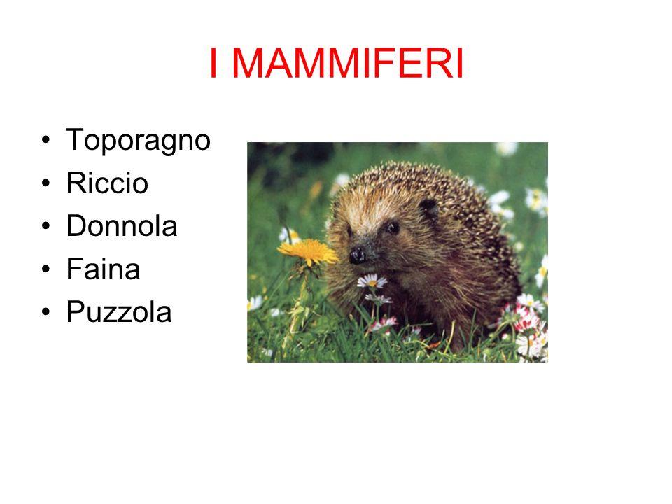 I MAMMIFERI Toporagno Riccio Donnola Faina Puzzola