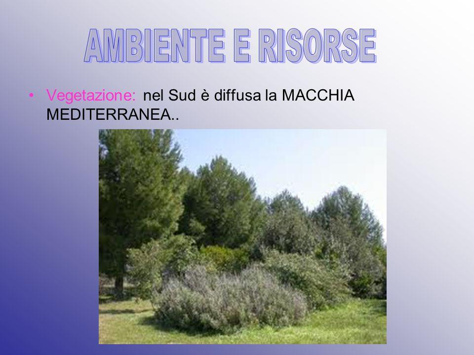 AMBIENTE E RISORSE Vegetazione: nel Sud è diffusa la MACCHIA MEDITERRANEA..