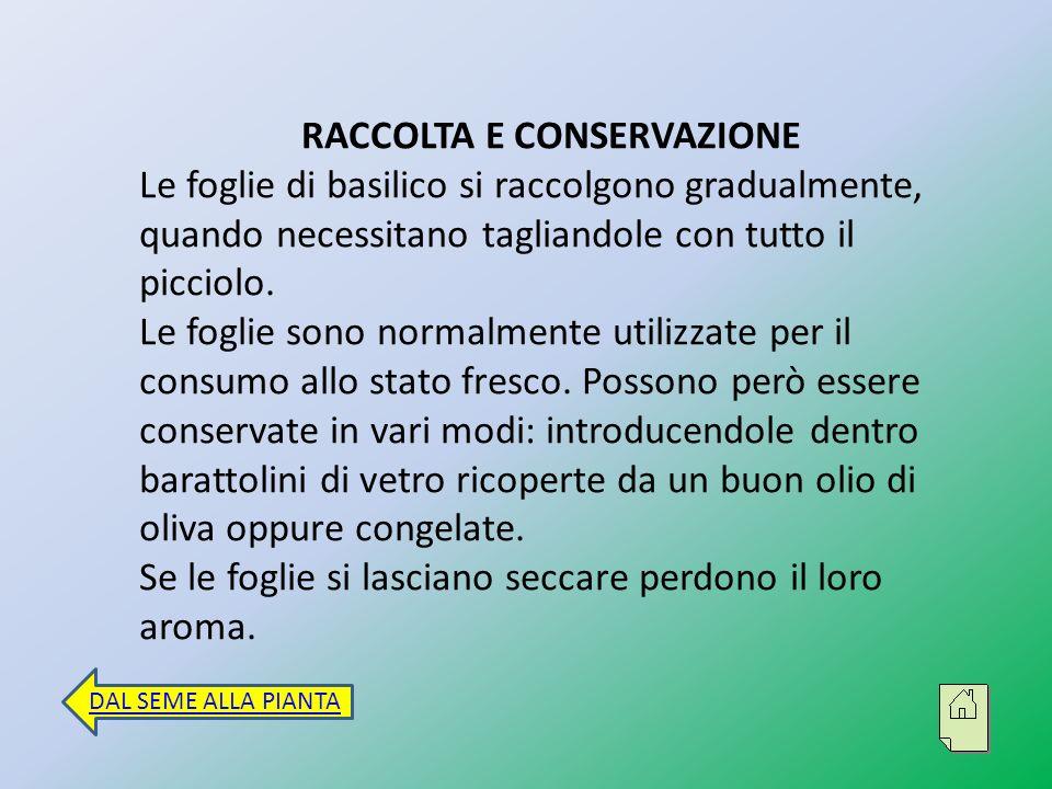 RACCOLTA E CONSERVAZIONE