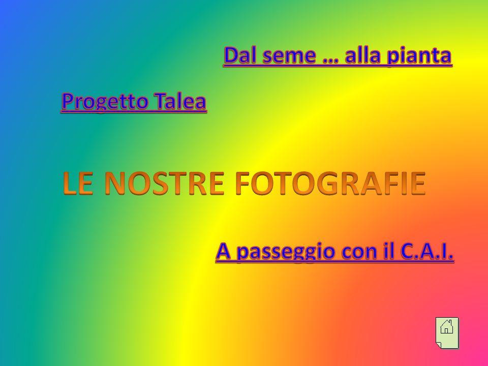LE NOSTRE FOTOGRAFIE Dal seme … alla pianta Progetto Talea