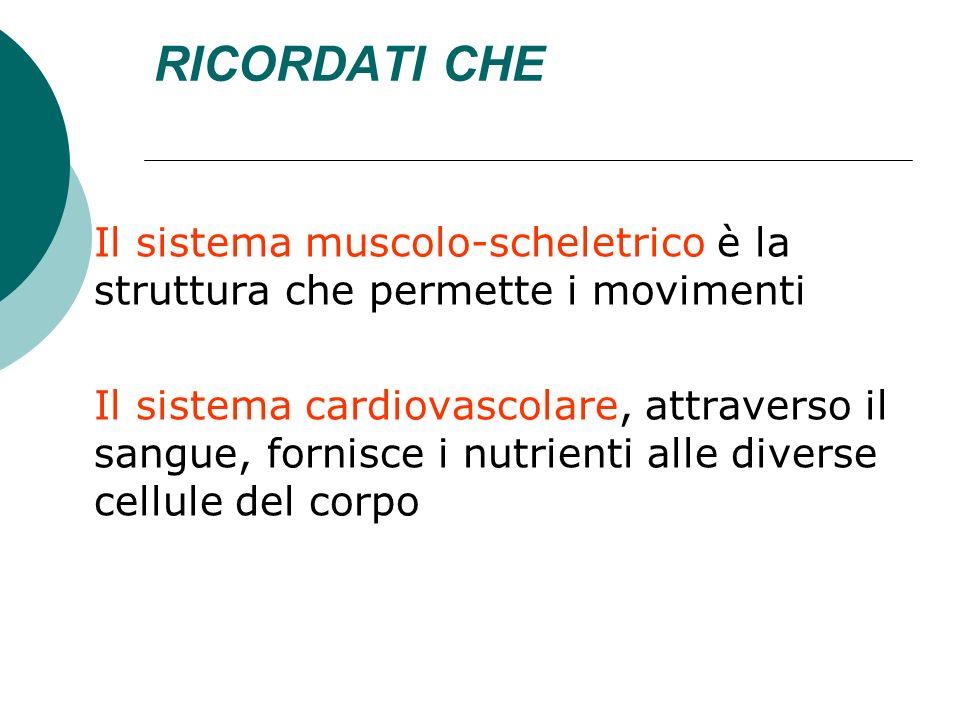 RICORDATI CHEIl sistema muscolo-scheletrico è la struttura che permette i movimenti.