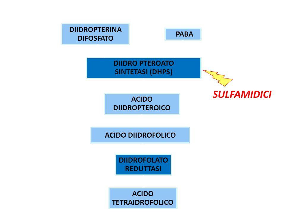 SULFAMIDICI MECCANISMO D'AZIONE DIIDROPTERINA DIFOSFATO PABA