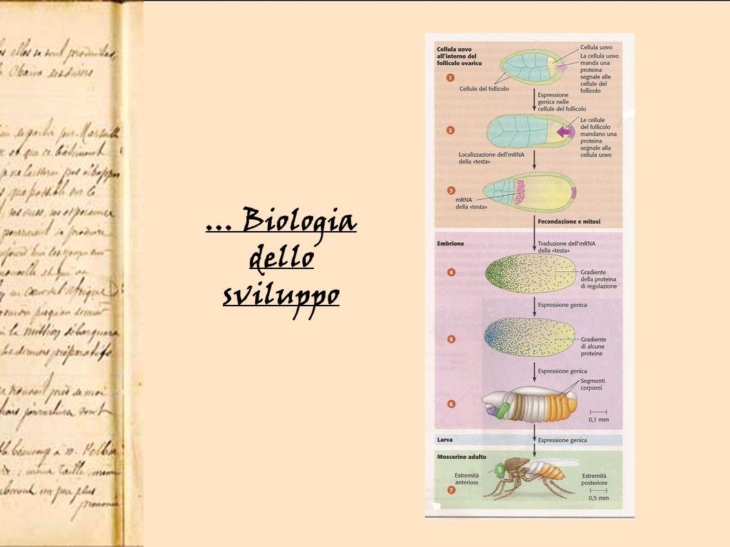 … Biologia dello sviluppo