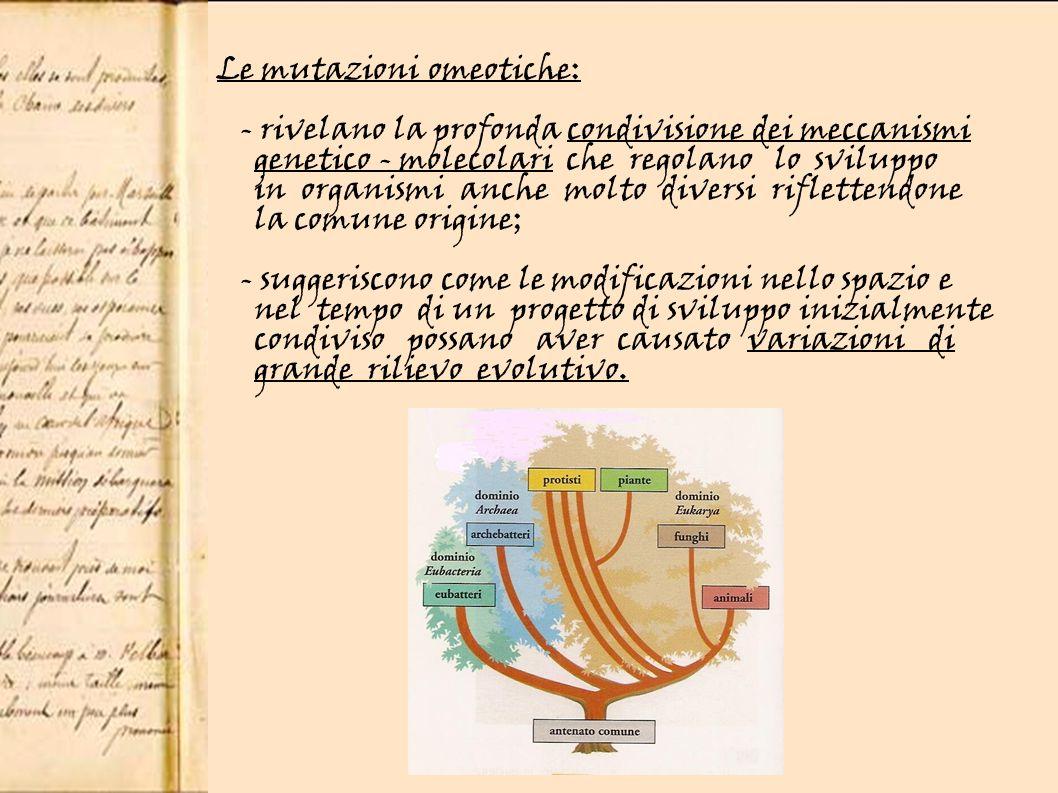 Le mutazioni omeotiche: