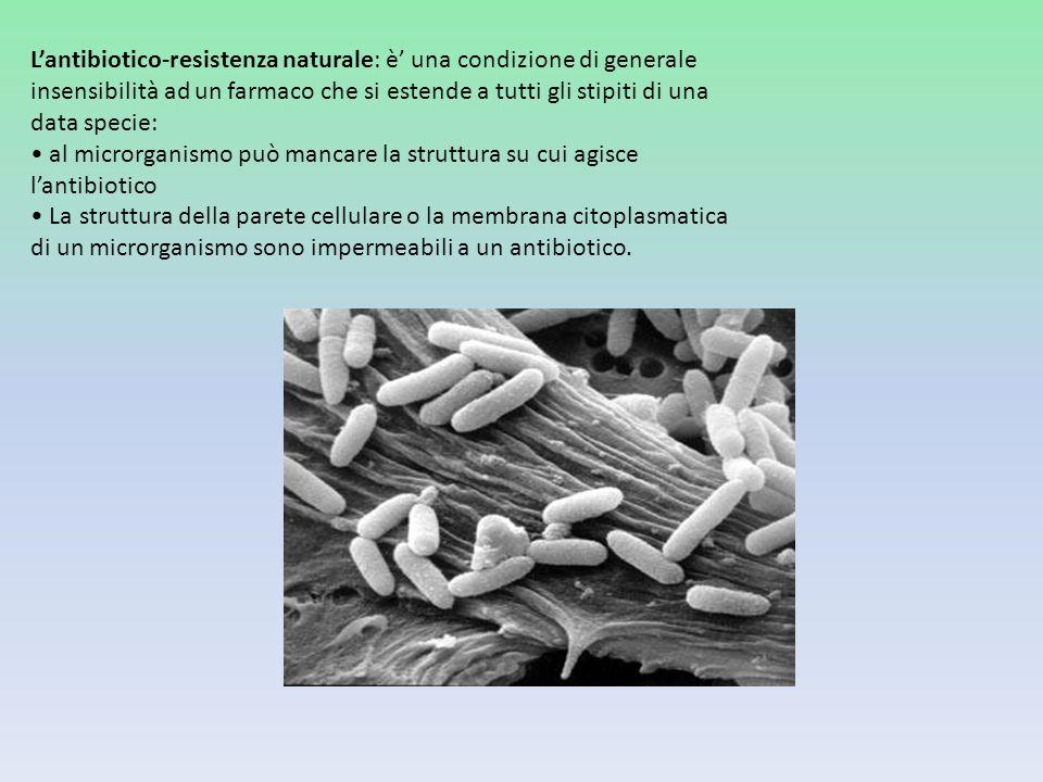 L'antibiotico-resistenza naturale: è' una condizione di generale