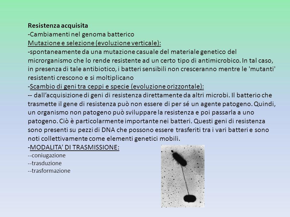 -Cambiamenti nel genoma batterico