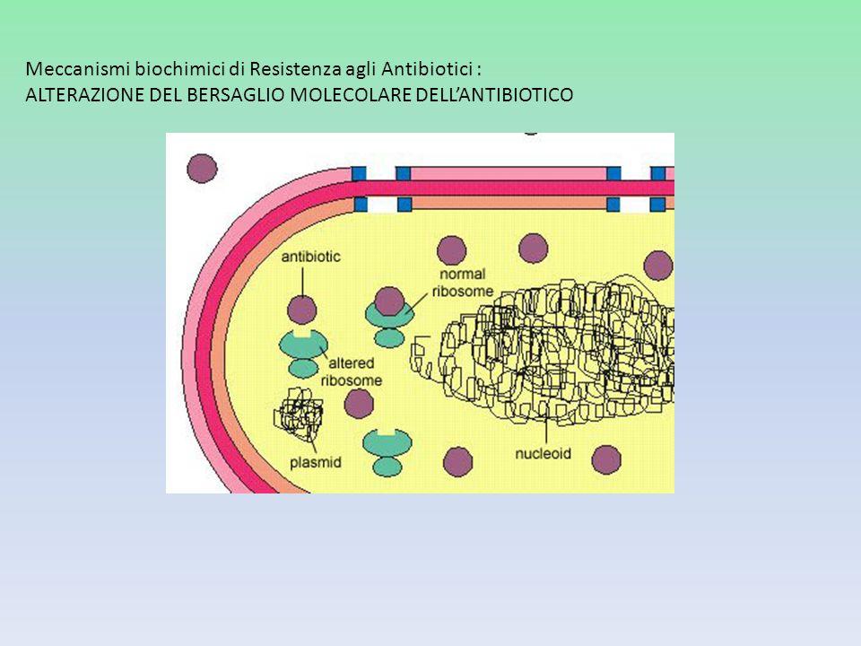 Meccanismi biochimici di Resistenza agli Antibiotici : ALTERAZIONE DEL BERSAGLIO MOLECOLARE DELL'ANTIBIOTICO