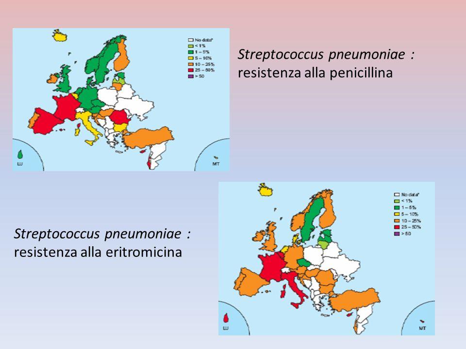 Streptococcus pneumoniae :