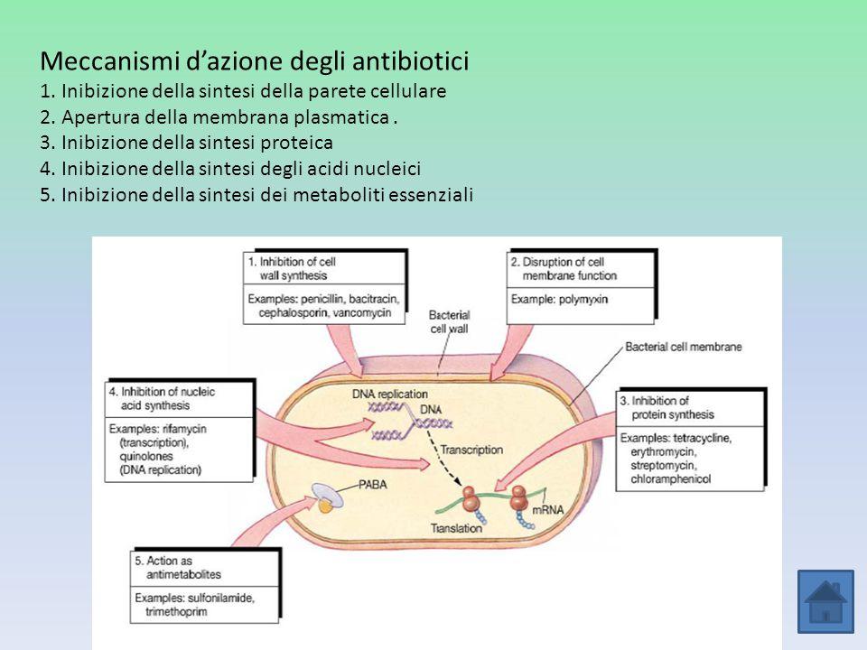 Meccanismi d'azione degli antibiotici