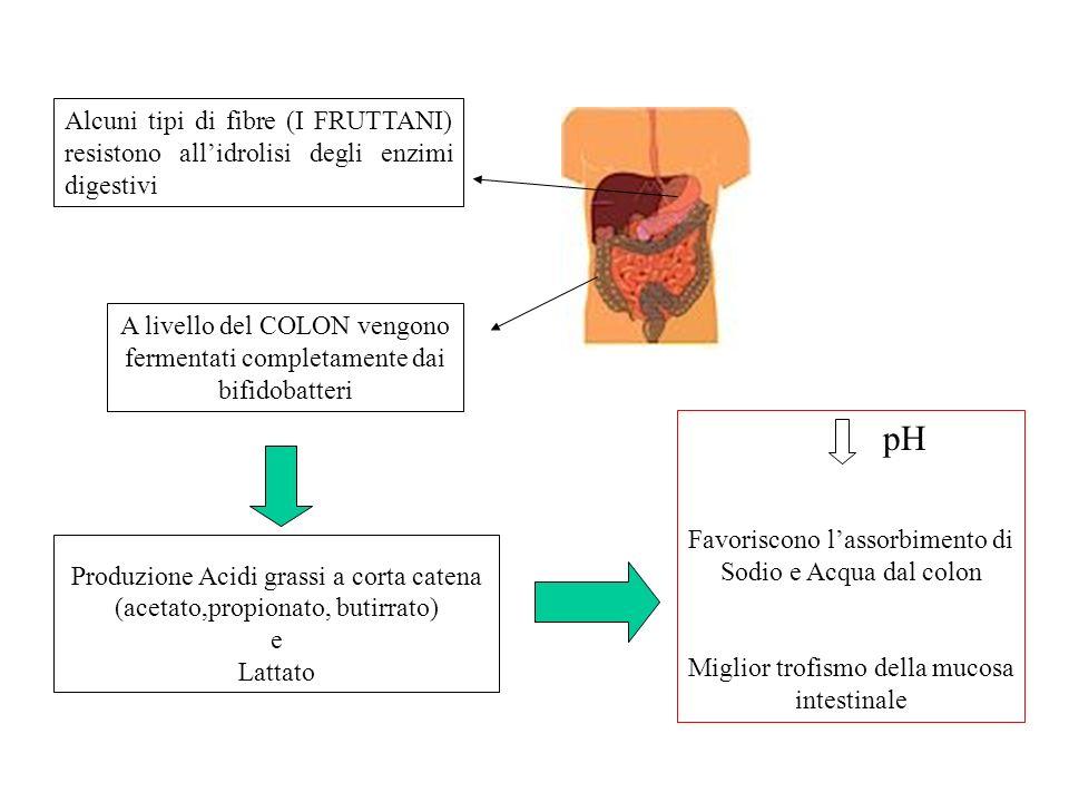 Alcuni tipi di fibre (I FRUTTANI) resistono all'idrolisi degli enzimi digestivi